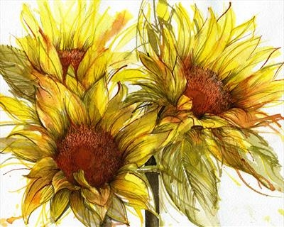 Sunflower Line Drawing : Cynthia barlow marrs sgfa: using coloured inks colour harmony in